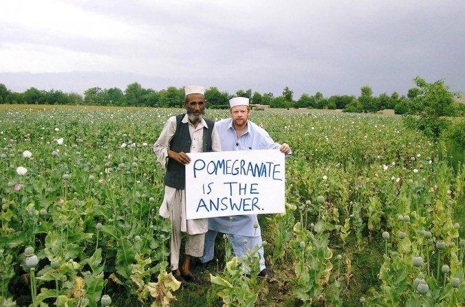 des agriculteurs afghans trouvent une alternative au pavot la culture de grenade agriculture. Black Bedroom Furniture Sets. Home Design Ideas