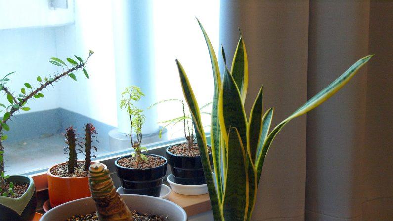 Vos plantes d'intérieur pensent, parlent et lisent vos pensées : de nouvelles recherches le démontrent