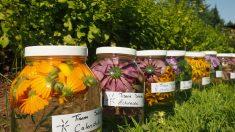 Les plantes coups de cœur de nos spécialistes en herboristerie