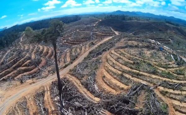 La Norvège est le premier pays à bannir la déforestation