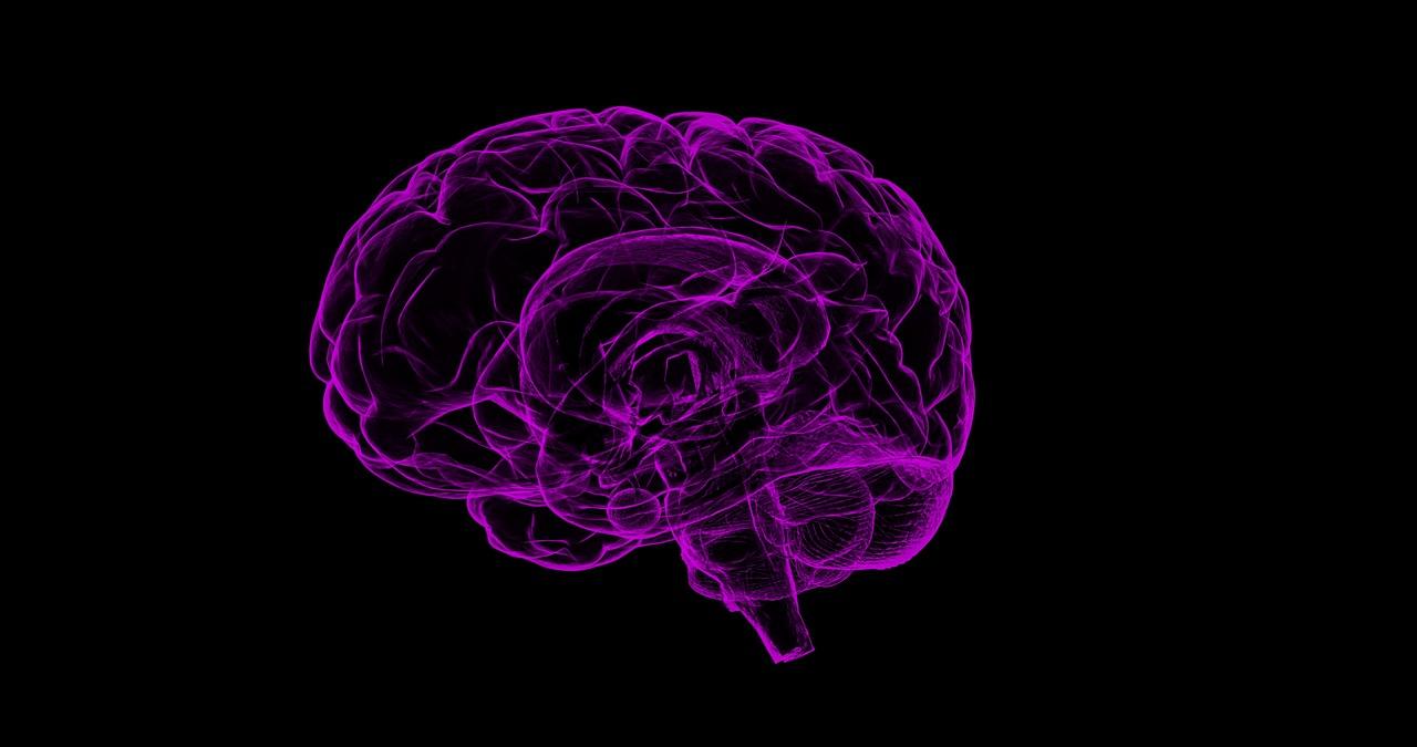 La mémoire résiderait-elle hors du cerveau?
