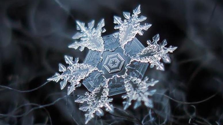 La grande diversité des flocons de neige vus au microscope