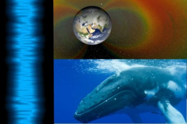 Les sons de l'espace ressemblent à ceux des baleines