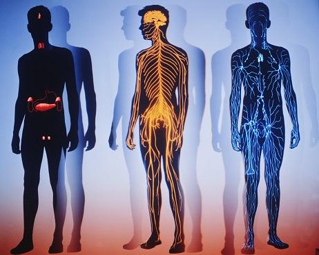 10 faits intéressants sur le corps humain
