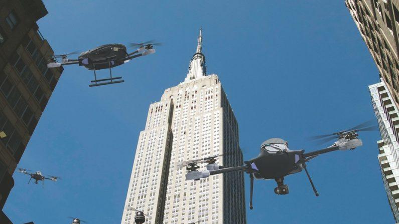 Drones au-dessus d'un nid de coucou