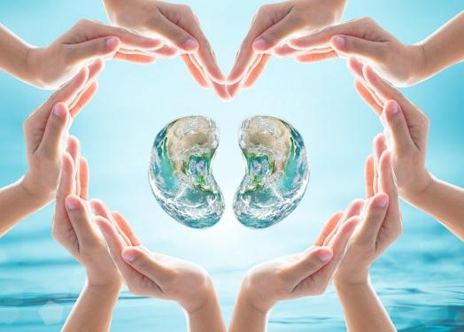 Le rôle primordial des reins dans le maintien de l'énergie vitale