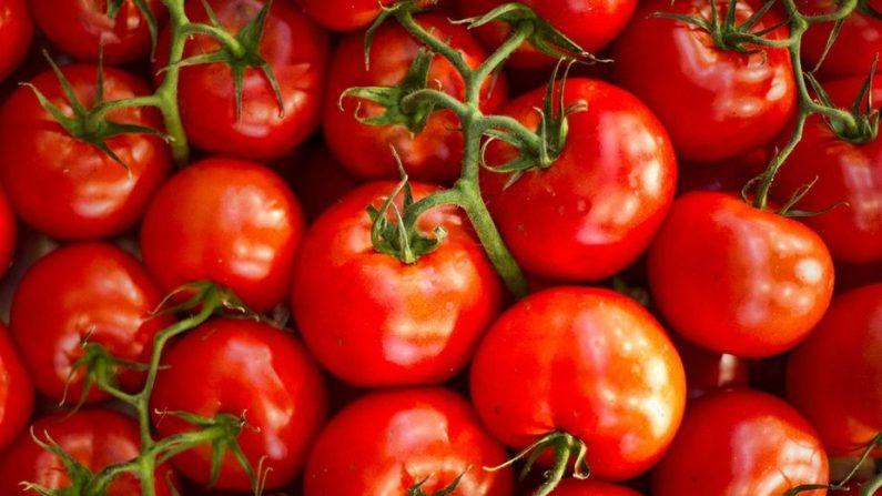 Pourquoi nos tomates n'ont-elles plus de goût?