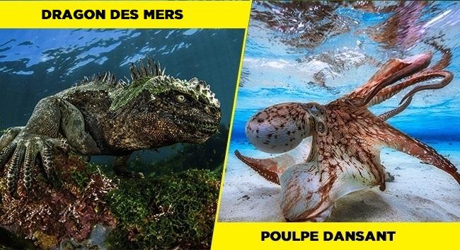 11 photos surprenantes et merveilleuses prises sous l'eau