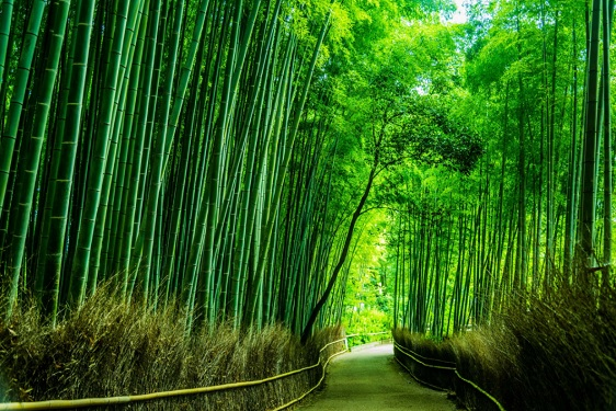 Le rideau de bambou entre l'Europe et la Chine