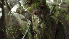 «Ce n'est pas un conte de fées, les arbres parlent»: la découverte d'une professeure de Colombie-Britannique