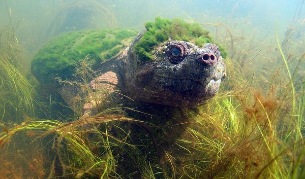 En mettant son appareil photo sous l'eau, cet homme prend accidentellement une tortue rare