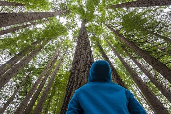 Suède: des forêts pour lutter contre les maladies liées au stress