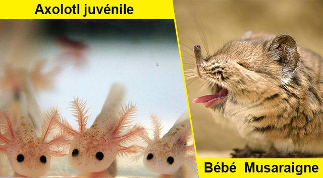 D'incroyables et étonnants bébés animaux montrant l'inspiration de la nature