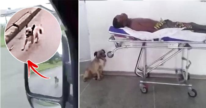 Son maître est dans l'ambulance, le chien se lance dans une folle course-poursuite