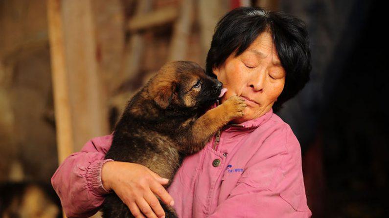 Durant plus de 20 ans, cette Chinoise retraitée a sauvé 3500 chiens du festival de la viande de Yulin