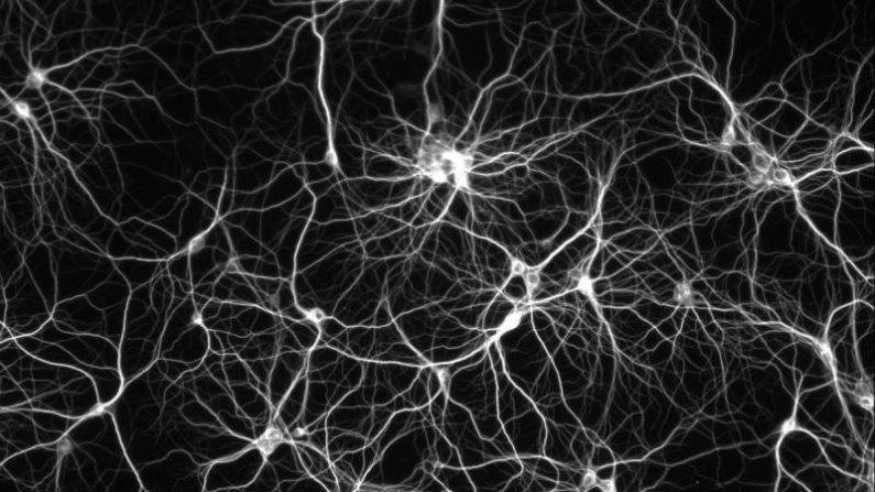 Deep learning, des réseaux de neurones pour traiter l'information