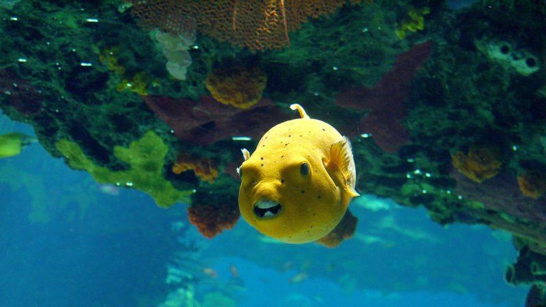 Les poissons ont-ils des états d'âme? Peut-être bien…