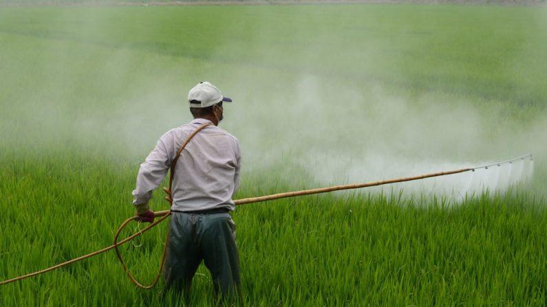Produits d'alimentation chinois: trop de pesticides et trop peu d'inspection