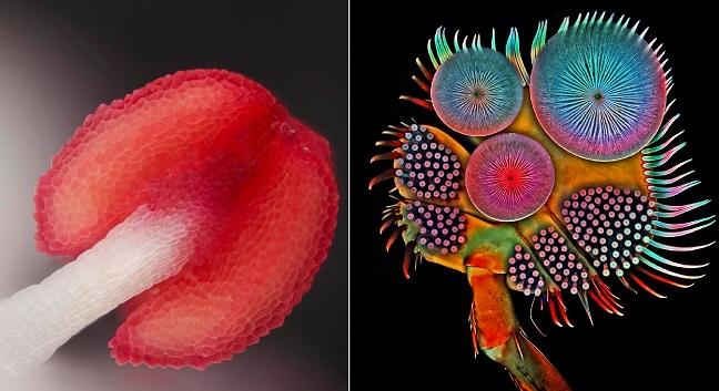 30 images étonnantes du monde microscopique comme vous ne l'avez jamais vu