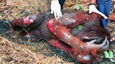 On ne peut pas rester indifférent au vrai prix de l'huile de palme