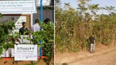 Cet ingénieur abandonne son travail pour planter des forêts en terre aride