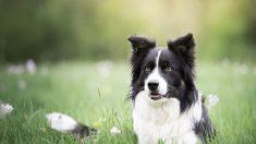 Les chiens et les humains associent différemment les mots