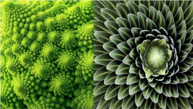 Des plantes et des fleurs qui mettent en lumière l'ordre sous-jacent de la nature