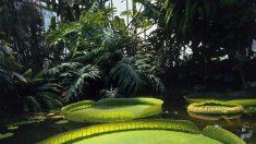 Les Jardins remarquables… prennent la pose au Jardin du Luxembourg
