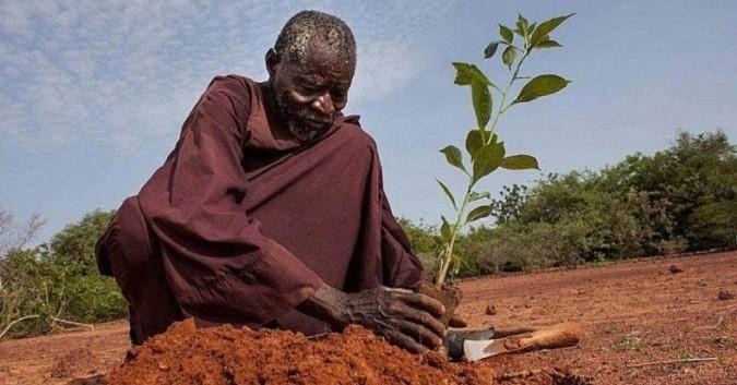 En Afrique, un homme a passé 30 ans à faire pousser des arbres pour arrêter le désert