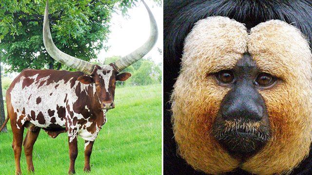 11 créatures fascinantes, trésors de mère nature, le n° 6 est transparent !