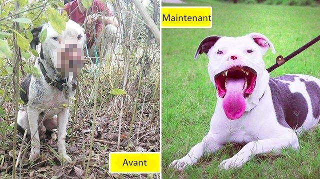 Comment un chien mutilé est devenu une mascotte
