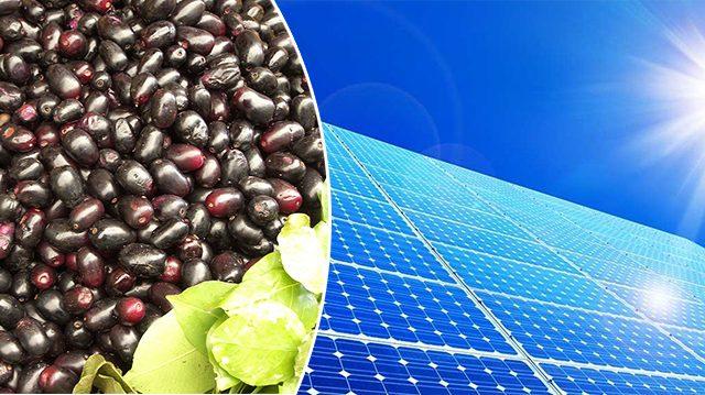 De l'énergie solaire à partir d'un fruit: comment est-ce possible?