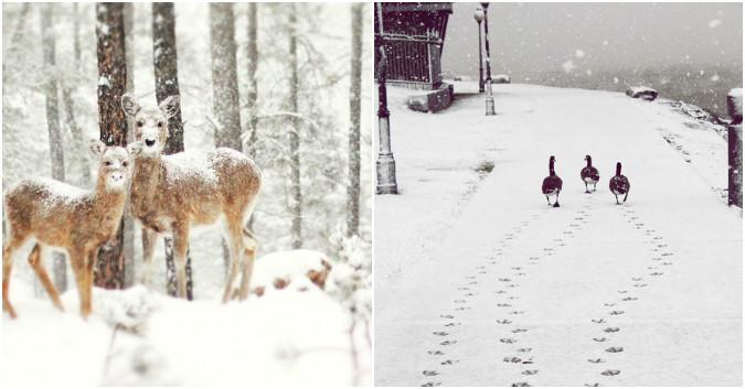 20 photos merveilleuses de paysages d'hiver autour du monde