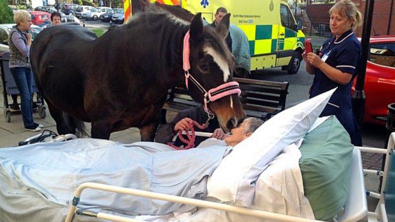 Un cheval donne un baiser d'adieu à sa propriétaire mourant à l'hôpital