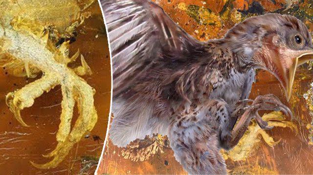 Vieux de 99 millions d'années! Un oisillon «le plus complet, jamais vu de tous les temps» préservé dans de l'ambre birman