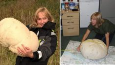 Un garde-forestier trouve un énorme champignon de 11 kg et le partage avec 15 collègues