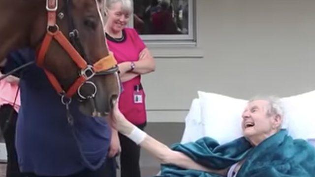 Le dernier souhait d'un homme âgé, de nourrir un cheval, le remplit de bonheur avant de mourir quelques jours plus tard