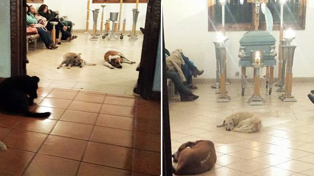 Des chiens errants viennent assister sans prévenir aux funérailles d'une amie des animaux
