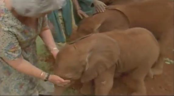 Depuis plus de 50 ans, cette femme prend en charge des bébés éléphants menacés d'extinction