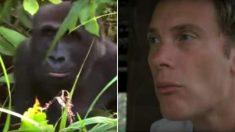 On lui avait dit de ne pas retourner voir ce gorille dont il avait pris soin 5 ans plus tôt - mais lorsque leurs yeux se croisèrent...