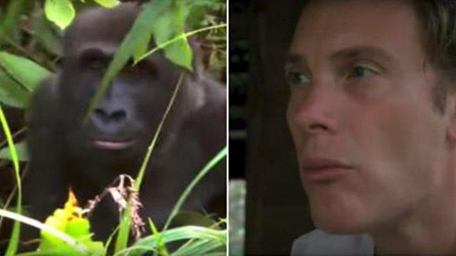 On lui avait dit de ne pas retourner voir ce gorille dont il avait pris soin 5 ans plus tôt – mais lorsque leurs yeux se croisèrent…