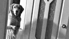Une famille se rend compte que leur chien dort à peine et les regarde la nuit – la raison est à briser le cœur