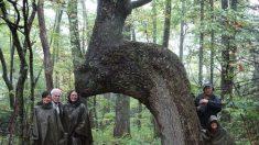 Si vous voyez un arbre de forme étrange comme celui-ci, faites des recherches – il pourrait vous indiquer quelque chose.