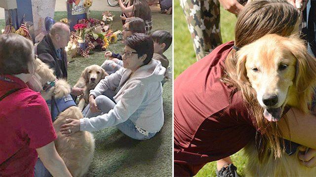 D'adorables «chiens de confort» sont apportés à Las Vegas pour aider les survivants de la tragique fusillade