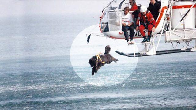 Ces secouristes à 4 pattes n'hésitent pas à sauter d'hélicoptères, nageant dans des eaux dangereuses pour sauver des vies