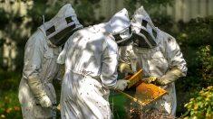 Une étude révèle que 75% du miel mondial contient des pesticides