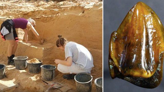 Des dents datées à 9,7 millions d'années bousculent la compréhension de l'histoire par les hommes