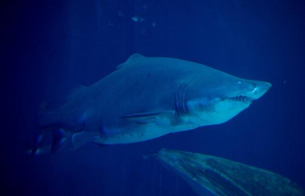 Un Britannique échappe de peu à une rencontre avec des requins au large de l'Australie