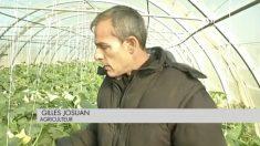 Un agriculteur réussit à sauver ses plants de courgettes d'un virus destructeur grâce à la musique!