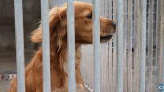 Fin des contrats aidés : des centaines d'animaux pourraient être euthanasiés à la SPA d'Angoulême
